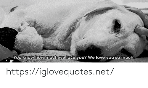 you-so-much: You know how much we love you? We love you so much. https://iglovequotes.net/