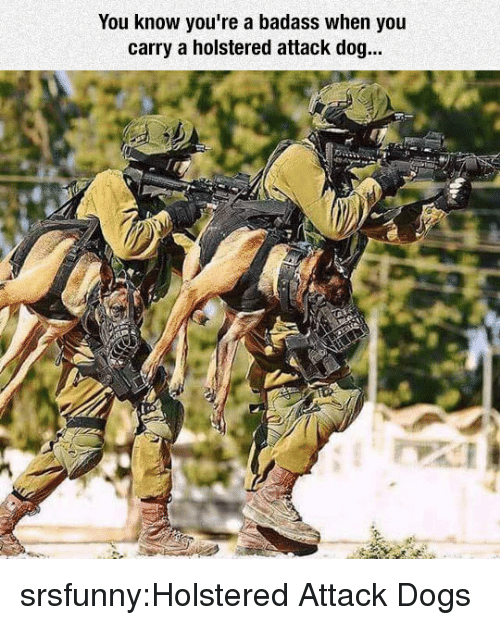 Dogs, Tumblr, and Blog: You know you're a badass when you  carry a holstered attack dog... srsfunny:Holstered Attack Dogs