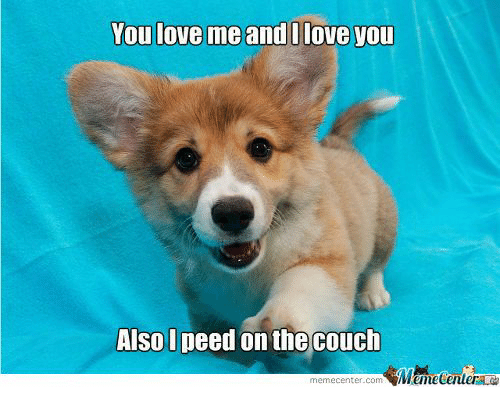 Meme Center: You love me and I love you  Also I peed on the couch  meme Center.com