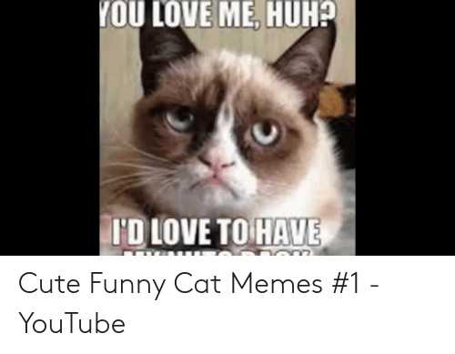 You Love Me Huh Id Love To Have Cute Funny Cat Memes 1 Youtube Cute Meme On Awwmemes Com