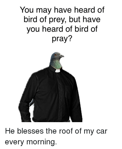 Reddit, Car, and Prey: You may have heard of  bird of prey, but have  you heard of bird of  pray?  2