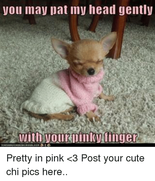 Cute, Head, and Memes: you may pat my head gently  With youkpinkytinge Pretty in pink <3  Post your cute chi pics here..