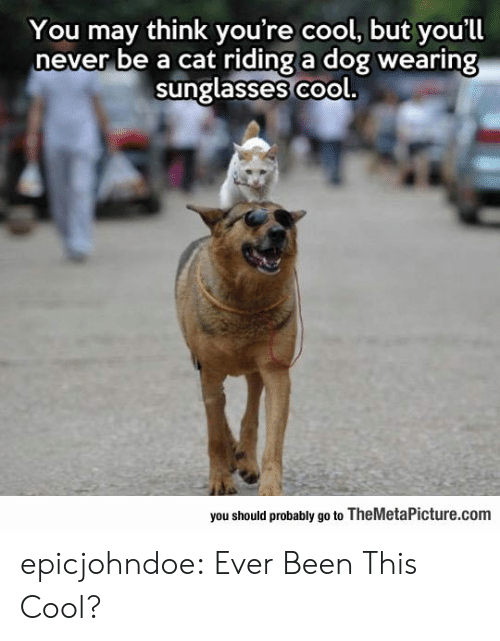Tumblr, Blog, and Cool: You may think you're cool, but you'll  never be a cat riding a dog wearing  sunglasses co  ol.  you should probably go to TheMetaPicture.com epicjohndoe:  Ever Been This Cool?