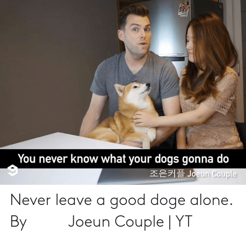 Never Leave: You never know what your dogs gonna do  조은커플 Joeun Couple Never leave a good doge alone.  By 조은커플 Joeun Couple | YT