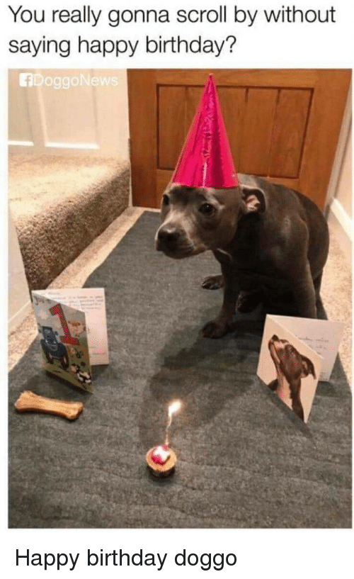 Birthday, Happy Birthday, and Happy: You really gonna scroll by without  saying happy birthday?  fDoggoNew Happy birthday doggo