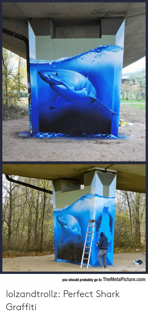 Graffiti, Tumblr, and Shark: you should probably go to TheMetaPicture.com lolzandtrollz:  Perfect Shark Graffiti