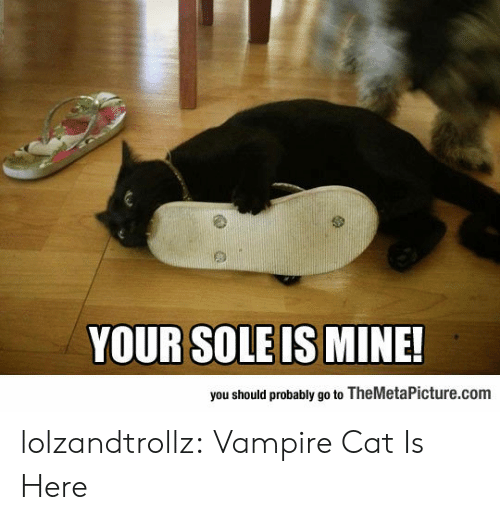 Tumblr, Blog, and Http: you should probably go to TheMetaPicture.com lolzandtrollz:  Vampire Cat Is Here