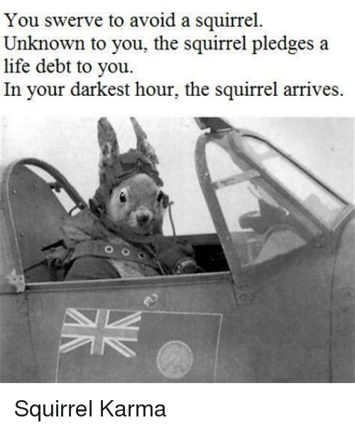 Life, Karma, and Squirrel: You swerve to avoid a squirrel.  Unknown to you, the squirrel pledges a  life debt to you.  In your darkest hour, the squirrel arrives. <p>Squirrel Karma</p>