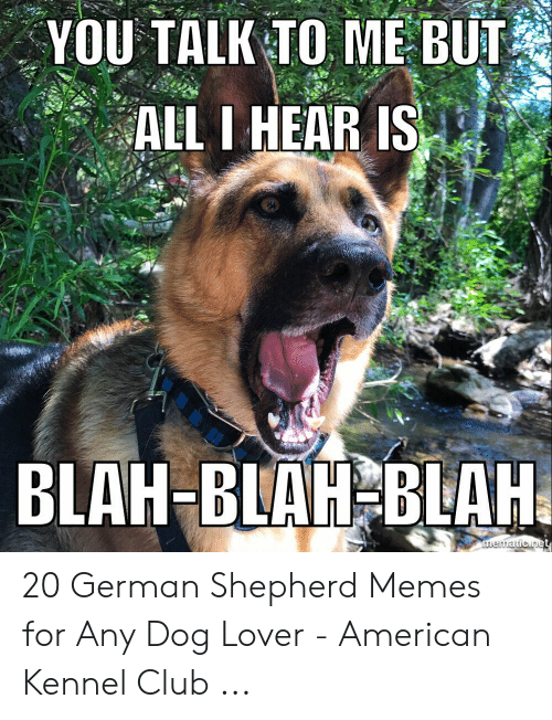 Club, Memes, and American: YOU TALK TO ME BUT  ALL I HEAR IS  BLAH-BLAH BLAH  mematicnet 20 German Shepherd Memes for Any Dog Lover - American Kennel Club ...