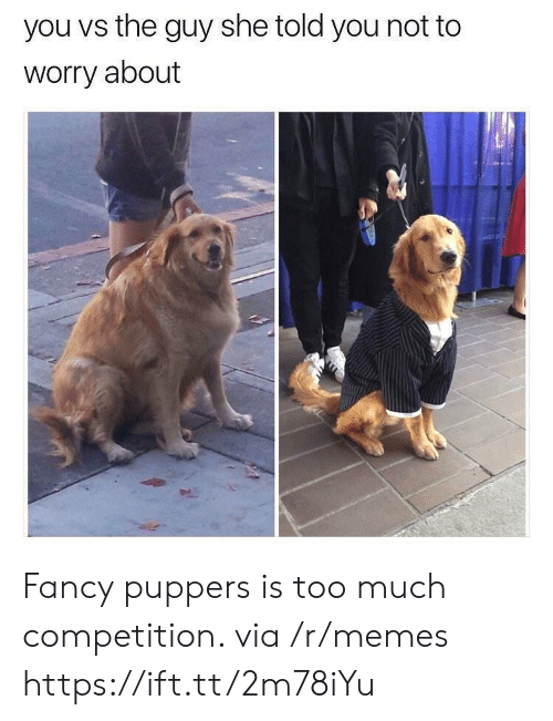 You Vs The Guy: you vs the guy she told you not to  worry about Fancy puppers is too much competition. via /r/memes https://ift.tt/2m78iYu