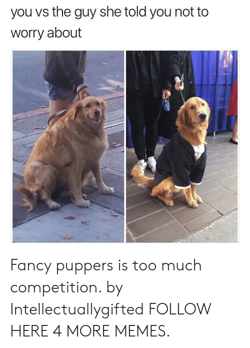 You Vs The Guy: you vs the guy she told you not to  worry about Fancy puppers is too much competition. by Intellectuallygifted FOLLOW HERE 4 MORE MEMES.