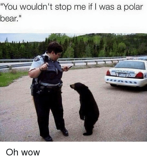 "Dank, Wow, and Bear: ""You wouldn't stop me if I was a polar  bear."" Oh wow"