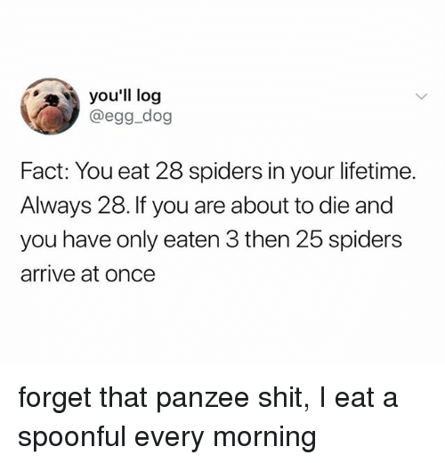 Spoonful: you'll log  @egg_dog  Fact: You eat 28 spiders in your lifetime.  Always 28. If you are about to die and  you have only eaten 3 then 25 spiders  arrive at once forget that panzee shit, I eat a spoonful every morning