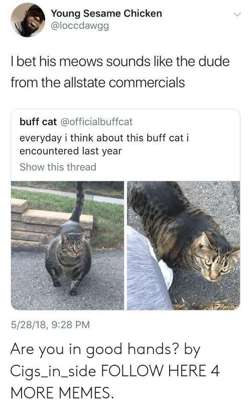Meows: Young Sesame Chicken  @loccdawgg  Tbet his meows sounds like the dude  from the allstate commercials  buff cat @officialbuffcat  everyday i think about this buff cat i  encountered last year  Show this thread  5/28/18, 9:28 PM Are you in good hands? by Cigs_in_side FOLLOW HERE 4 MORE MEMES.