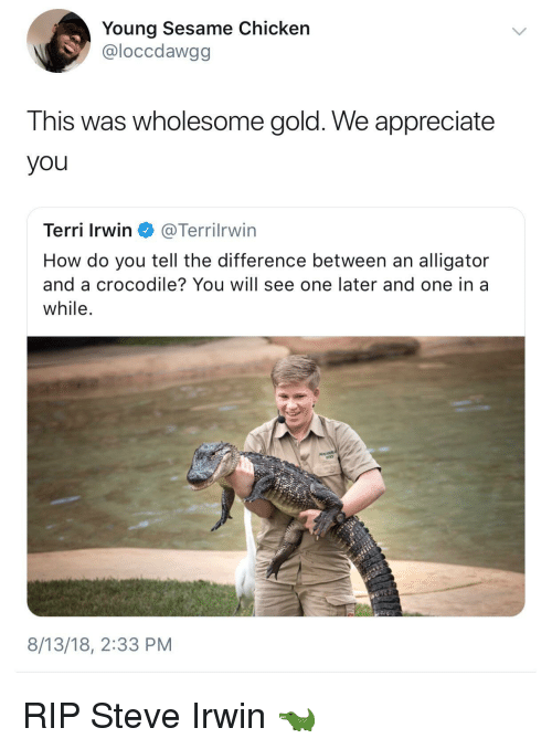 Steve Irwin, Alligator, and Appreciate: Young Sesame Chicken  @loccdawgg  This was wholesome gold. We appreciate  you  Terri Irwin @Terrilrwin  How do you tell the difference between an alligator  and a crocodile? You will see one later and one in a  while  8/13/18, 2:33 PM RIP Steve Irwin 🐊