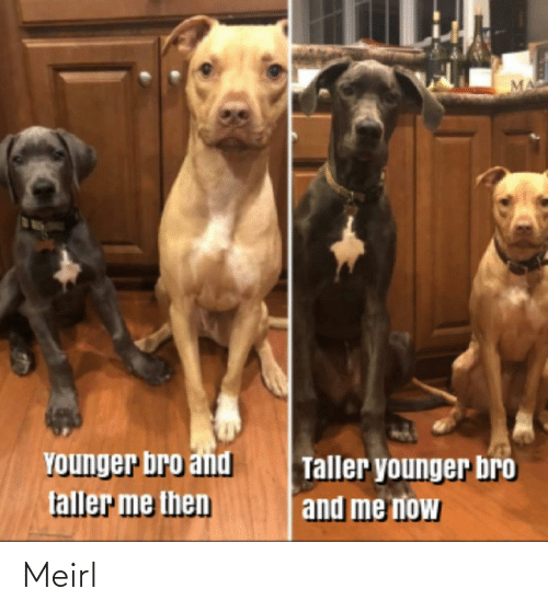 bro: YOunger bro and  faller me then  Taller younger bro  and me now Meirl