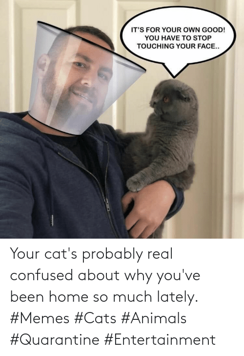 Youve: Your cat's probably real confused about why you've been home so much lately. #Memes #Cats #Animals #Quarantine #Entertainment