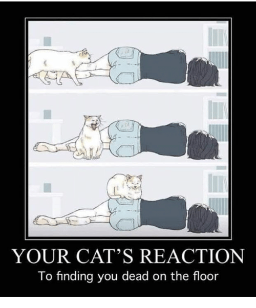 Cats, You, and Dead: YOUR CAT'S REACTION  To finding you dead on the floor