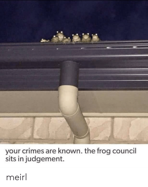 MeIRL, Frog, and Judgement: your crimes are known. the frog council  sits in judgement. meirl