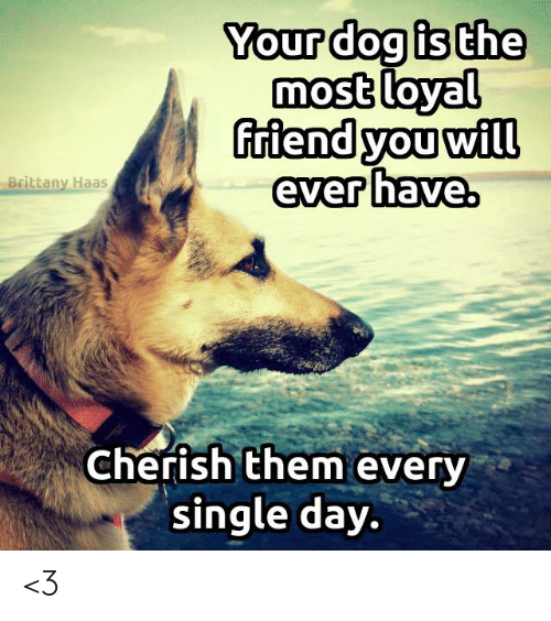 cherish: Your dog is the  most loyal  riend you will  ever have.  Brittany Haas  Cherish them every  single day. <3