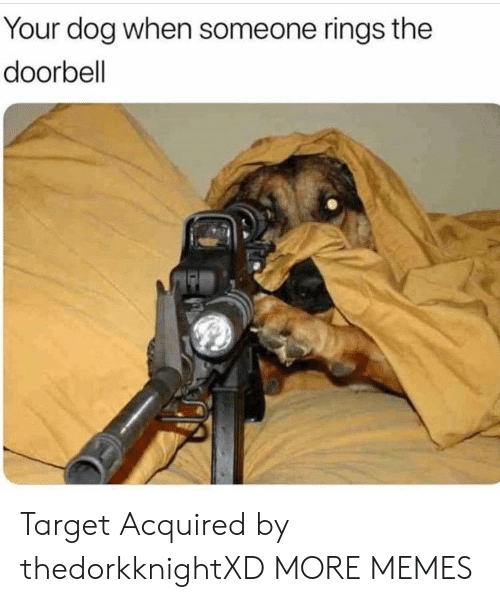Dank, Memes, and Target: Your dog when someone rings the  doorbell Target Acquired by thedorkknightXD MORE MEMES