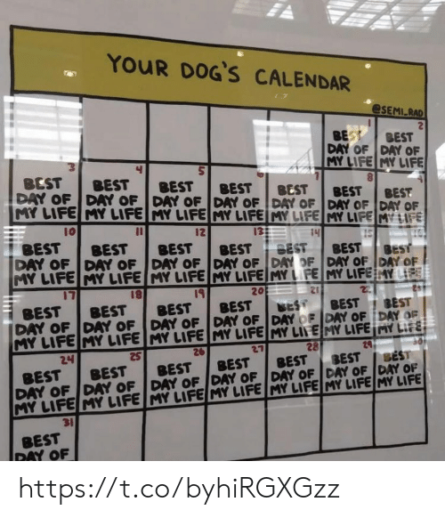 Dogs, Life, and Memes: YOUR DOG'S CALENDAR  @SEMI RAD  BEST  BEST  DAY OF DAY OF  MY LIFE MY LIFE  BEST  DAY OF  BEST  BEST  BEST  DAY OF DAY OF DAY OF DAY OF DAY OF DAY OF  MY LIFE MY LIFE MY LIFE MY LIFE MY LIFE MY LIFEMY LIFE  BEST  BEST  BEST  10  13  12  14  SEST  15  BEST  DAY OF  BEST  BEST  BEST  DAY OF DAY OF DAY OF DAY OF  MY LIFE MY LIFE MY LIFE MY LIFE MY LFE MY LIFE Y LIFE  BEST  BEST  DAY OF DAY OF  17  20  19  BEST  DAY OF DAY OF DAY OF DAY OF DAY OF DAY OF DAY OF  MY LIFE MY LIFE MY LIFE MY LIFE MY LIFE MY LIFE MY LIFE  2  BEST  BEST  BEST  BEST  BEST  BEST  24  28  27  BEST  26  24  BEST  BEST  BEST  BEST  BEST  DAY OF DAY OF DAY OF DAY OF DAY OF DAY OF DAY OF  MY LIFE MY LIFE MY LIFE MY LIFE MY LIFE MY LIFE MY LIFE  BEST  31  BEST  DAY OF https://t.co/byhiRGXGzz
