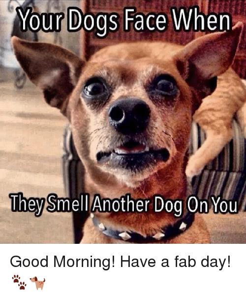 Memes, Smell, and 🤖: Your Dogs Face When  They  Another Dog On You  Smell Good Morning! Have a fab day! 🐾🐕