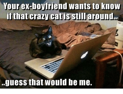 crazy cats: Your ex-boyfriend wants to know  if that crazy Cat is still around  guess that Would be me.