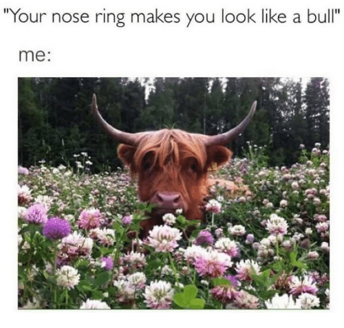 """Ring, Bull, and You: Your nose ring makes you look like a bull""""  me:"""