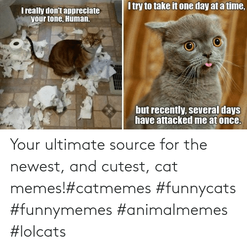 source: Your ultimate source for the newest, and cutest, cat memes!#catmemes #funnycats #funnymemes #animalmemes #lolcats