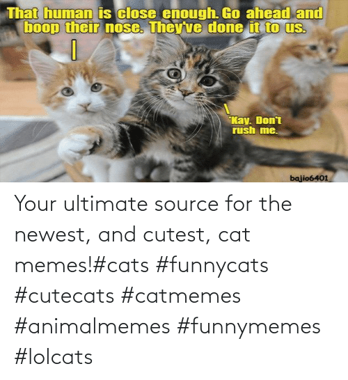 Cat Memes: Your ultimate source for the newest, and cutest, cat memes!#cats #funnycats #cutecats #catmemes #animalmemes #funnymemes #lolcats