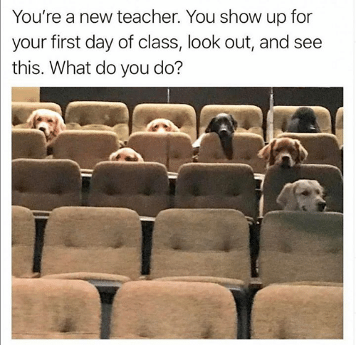 First Day Of Class: You're a new teacher. You show up for  your first day of class, look out, and see  this. What do you do?