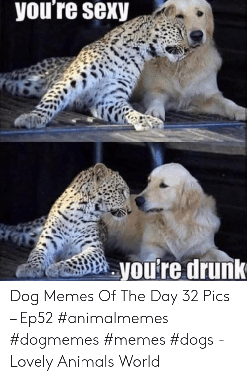 Animals, Dogs, and Drunk: you're sexy  you're drunk Dog Memes Of The Day 32 Pics – Ep52 #animalmemes #dogmemes #memes #dogs - Lovely Animals World