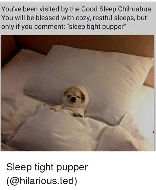 """Blessed, Chihuahua, and Funny: You've been visited by the Good Sleep Chihuahua.  You will be blessed with cozy, restful sleeps, but  only if you comment: """"sleep tight pupper"""" Sleep tight pupper (@hilarious.ted)"""