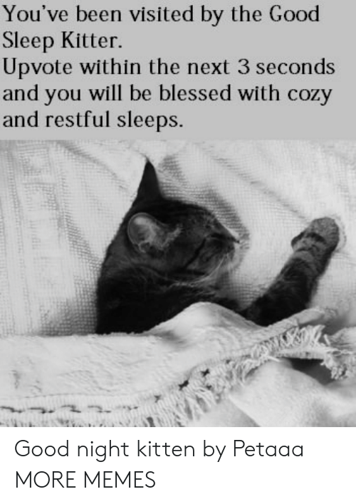 Nighting: You've been visited by the Good  Sleep Kitter.  Upvote within the next 3 seconds  and you will be blessed with cozy  and restful sleeps. Good night kitten by Petaaa MORE MEMES