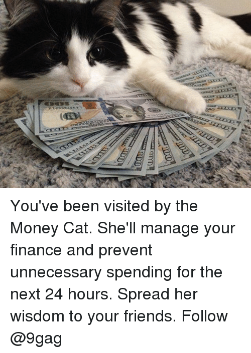money cat: You've been visited by the Money Cat. She'll manage your finance and prevent unnecessary spending for the next 24 hours. Spread her wisdom to your friends. Follow @9gag