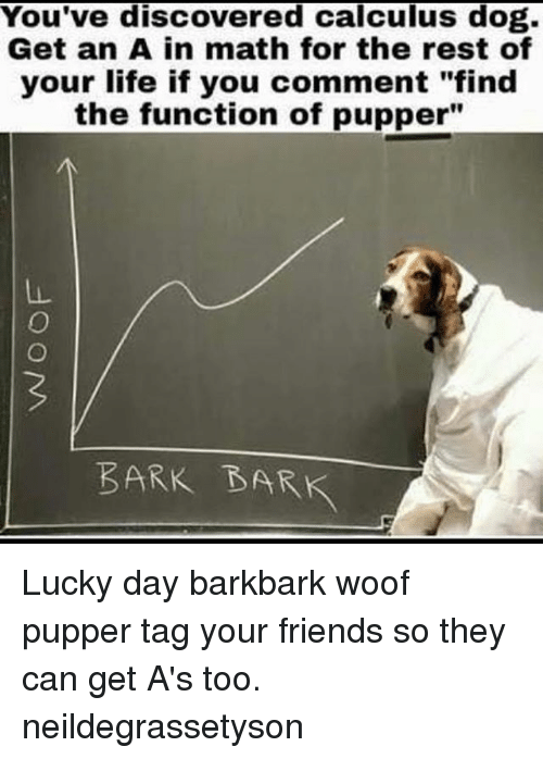 "Friends, Life, and Memes: You've discovered calculus dog.  Get an A in math for the rest of  your life if you comment ""find  the function of pupper""  BARK BARK Lucky day barkbark woof pupper tag your friends so they can get A's too. neildegrassetyson"