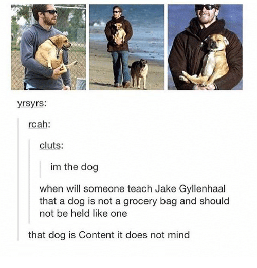 Jake Gyllenhaal: yrsyrs:  rcah:  cluts:  im the dog  when will someone teach Jake Gyllenhaal  that a dog is not a grocery bag and should  not be held like one  that dog is Content it does not mind