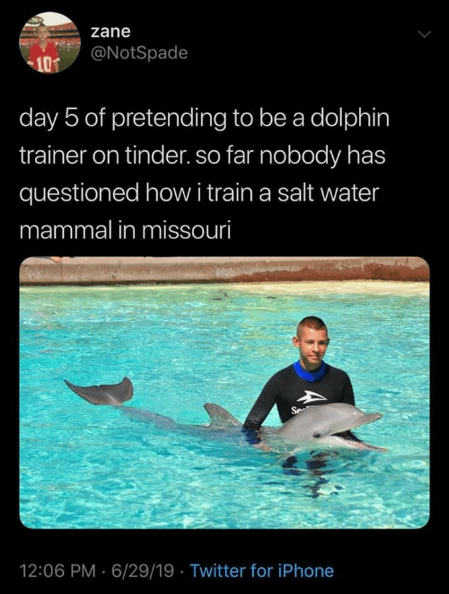 Dolphin: zane  @NotSpade  101  day 5 of pretending to be a dolphin  trainer on tinder. so far nobody has  questioned howi train a salt water  mammal in missouri  Se  12:06 PM 6/29/19 Twitter for iPhone