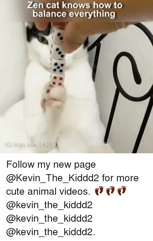 Cute, Memes, and Videos: Zen cat knows how to  balance everything Follow my new page @Kevin_The_Kiddd2 for more cute animal videos. 👣👣👣@kevin_the_kiddd2 @kevin_the_kiddd2 @kevin_the_kiddd2.