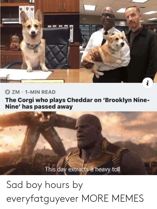 corgi: ZM 1-MIN READ  The Corgi who plays Cheddar on 'Brooklyn Nine-  Nine' has passed away  This day extracts a heavy toll Sad boy hours by everyfatguyever MORE MEMES