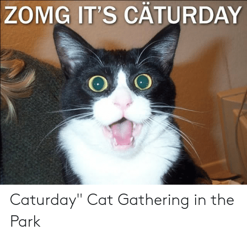 "Caturday, Cat, and Park: ZOMG IT'S CATURDAY Caturday"" Cat Gathering in the Park"