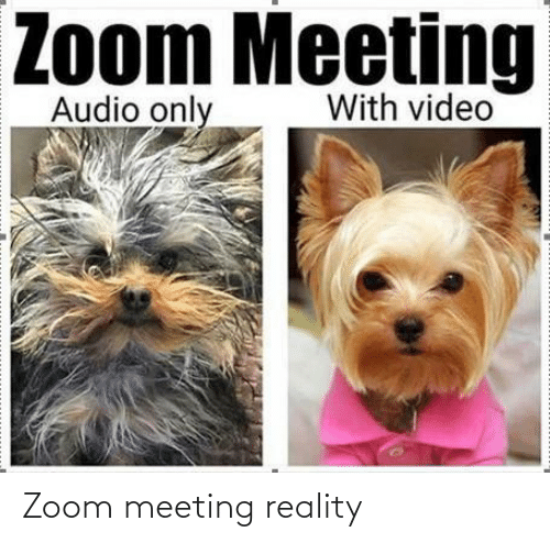 meeting: Zoom meeting reality