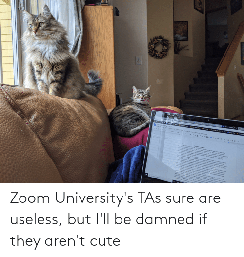 damned: Zoom University's TAs sure are useless, but I'll be damned if they aren't cute